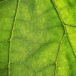 Zielony marketing a rozwój Twojej firmy