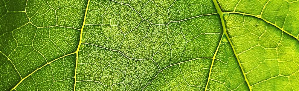 Liść zielony marketing